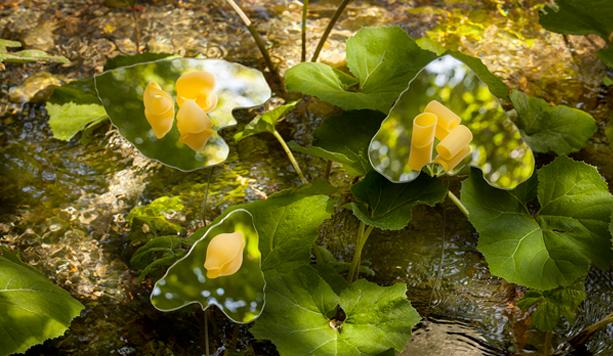 Immagine pasta Delverde Fotografia Natura Land Art Sorgente Acque Vive Abruzzo