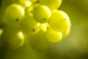 Uva Abruzzo